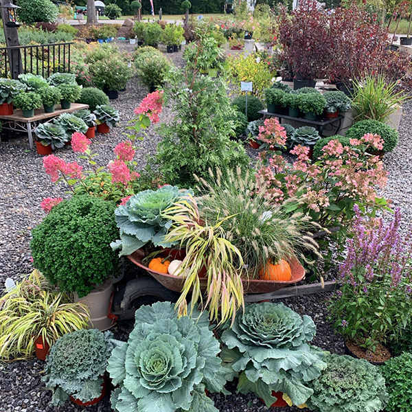 Plants to brighten fall landscapes