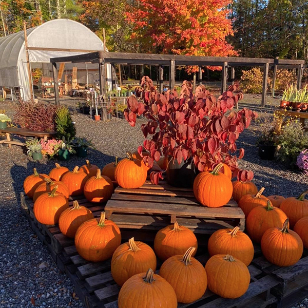 Grasshoppers is fully stocked for fall planting